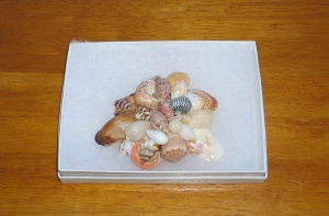 Sea shell broach 1